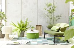 House-plants-GettyImages-663760057-58d93feb5f9b5846839a72c1